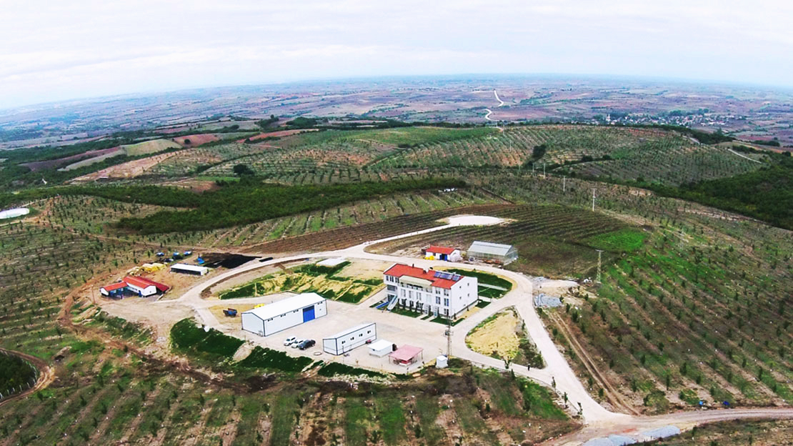 Edirne Türkiye'de Cevizin Başkenti Olacak