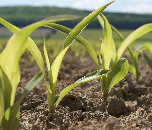 Agritechnica Tarım Makineleri Fuarı